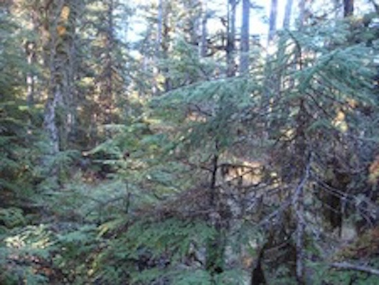 Thoms Place, Wrangell, Alaska 99929, ,Land,Remote,Thoms Place,1134