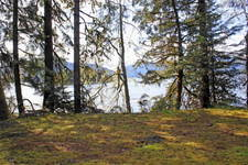 Wrangell,Alaska 99929,Land,1039