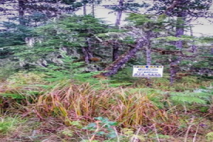 Wrangell,Alaska 99929,Land,1060